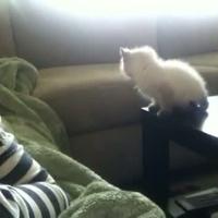 Bátor cica