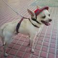 A sildes sapka a furcsa kutyáknál is trendi