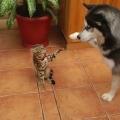 Meglepő barátság