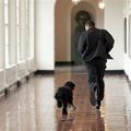 Szőrgombóc jellegű az Obama család új kutyája