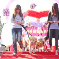 Kutyákat házasítanak, hát persze, hogy Kínában