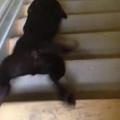 Lépcsőszörf