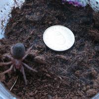 Íme Dugó, az iciripiciri pókocska - Ő cuki?
