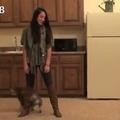 45 kutyatrükk