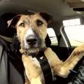Hallo, itt Kutya! Épp vezetek.