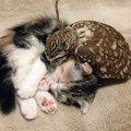 Egy cica és egy bagoly barátsága