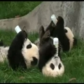 Kínai állatkert
