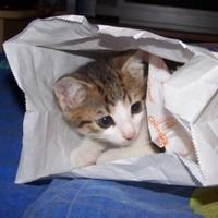 Macskás sajtburger, de nem úúúgy