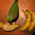 Jó étvágyat kívánunk minden kedves papagájnak!