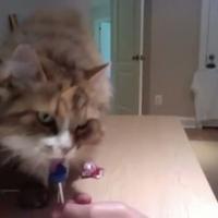 A nyalókás cica visszatér