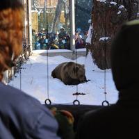 A medve nem ijedt meg az árnyékától, mi viszont igen