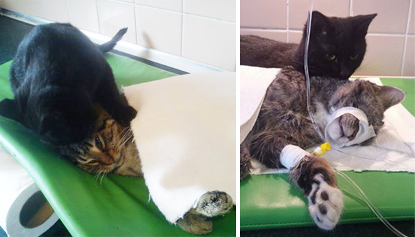 veterinary-nurse-cat-hugs-shelter-animals-radamenes-bydgoszcz-poland-6.jpg