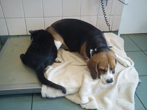 veterinary-nurse-cat-hugs-shelter-animals-radamenes-bydgoszcz-poland-8.jpg