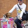 Ilyen a maximálisan elégedett bringás kutya