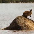 Halálos vihar és áradás Ausztráliában