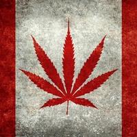 Legális lesz a marihuána Kanadában