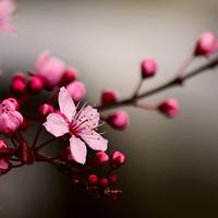 Cseresznyevirág inspirációk