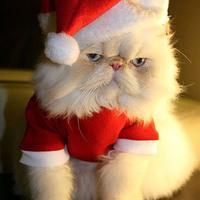 Állati Karácsony
