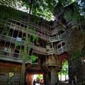 A fa szeretete: gigantikus lombház 14 év alatt
