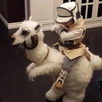 Imádnivaló Star Wars-os jelmezt kapott egy kisfiú