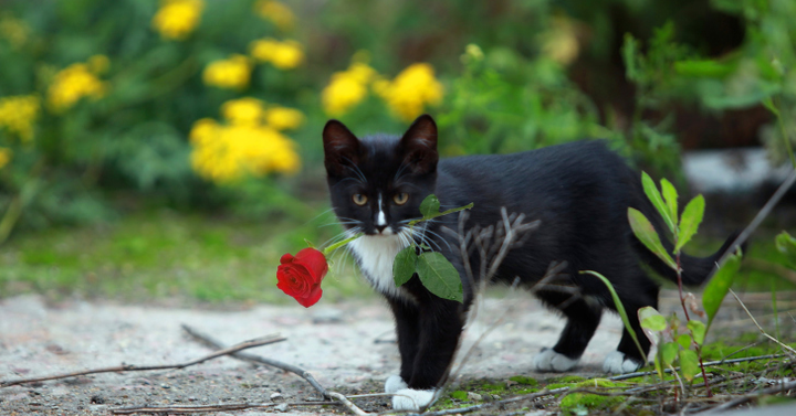 Virágoskert – társasjáték ajánló