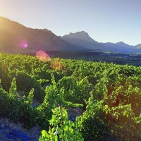 A vízhiány hatása a szőlőtermelésre Dél-Afrikában