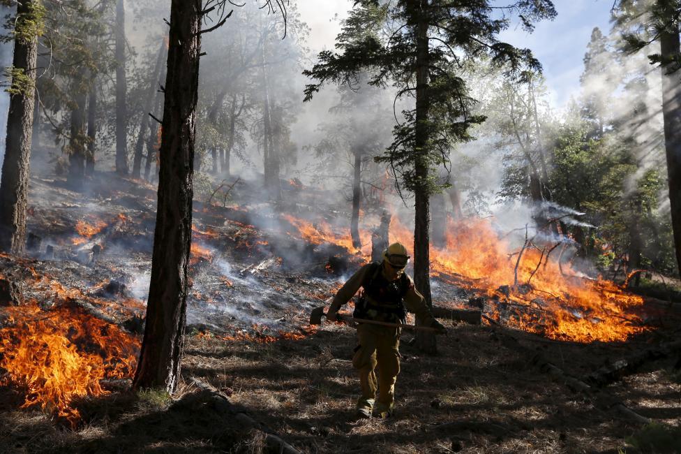 Egy tűzoltó felügyeli a tűz terjedését a kaliforniai San Bernardino Nemzeti Parkban. Az elmúlt héten több mint 1000 embernek kellett elhagynia otthonát a nyugati part három államában pusztító erdőtüzek miatt. (f.: Reuters)