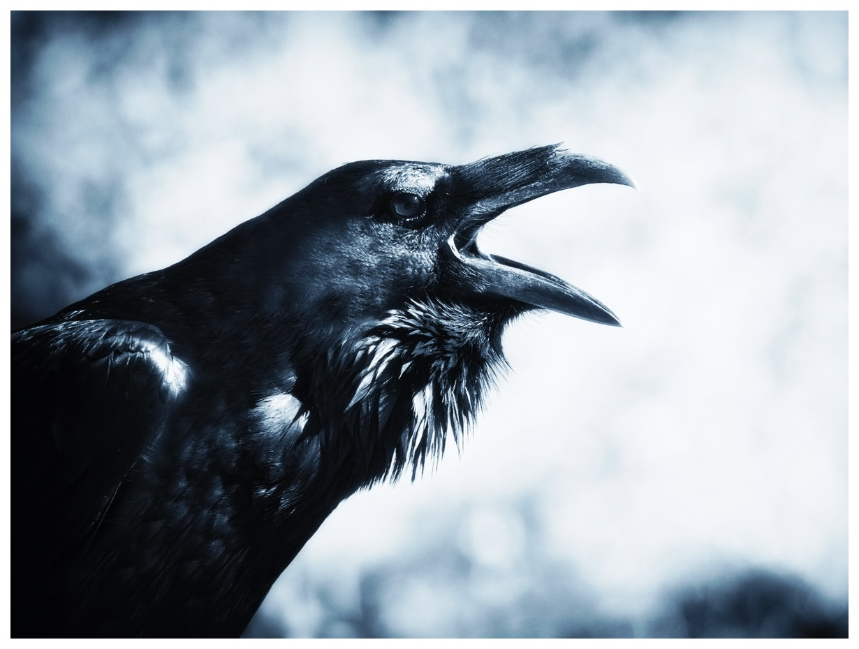 raven-spirit-animal.jpg