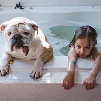A bulldog a kislány legjobb barátja