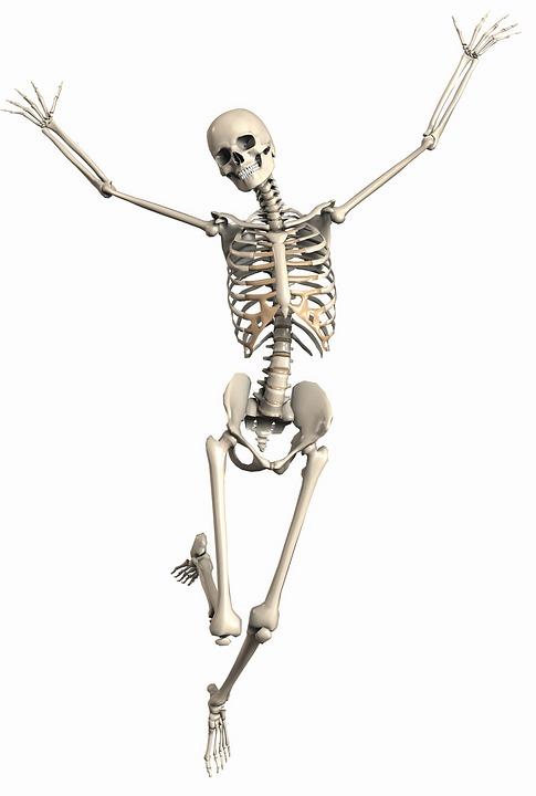 csont_kalcium.jpg