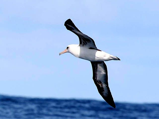 http://m.blog.hu/do/dogablogom/image/albatrosz.jpg