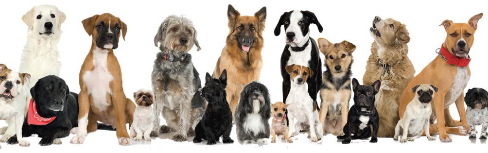 dog-adoption.jpg