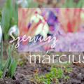 SZERVUSZ MÁRCIUS! (Hi dearest March!)