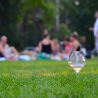WINE SHOCK: TITKOS ROSÉ BUBORÉKOK A MARGITSZIGETEN (Secret Rosé Bubbles picnic by Wine Shock on Margaret Island)