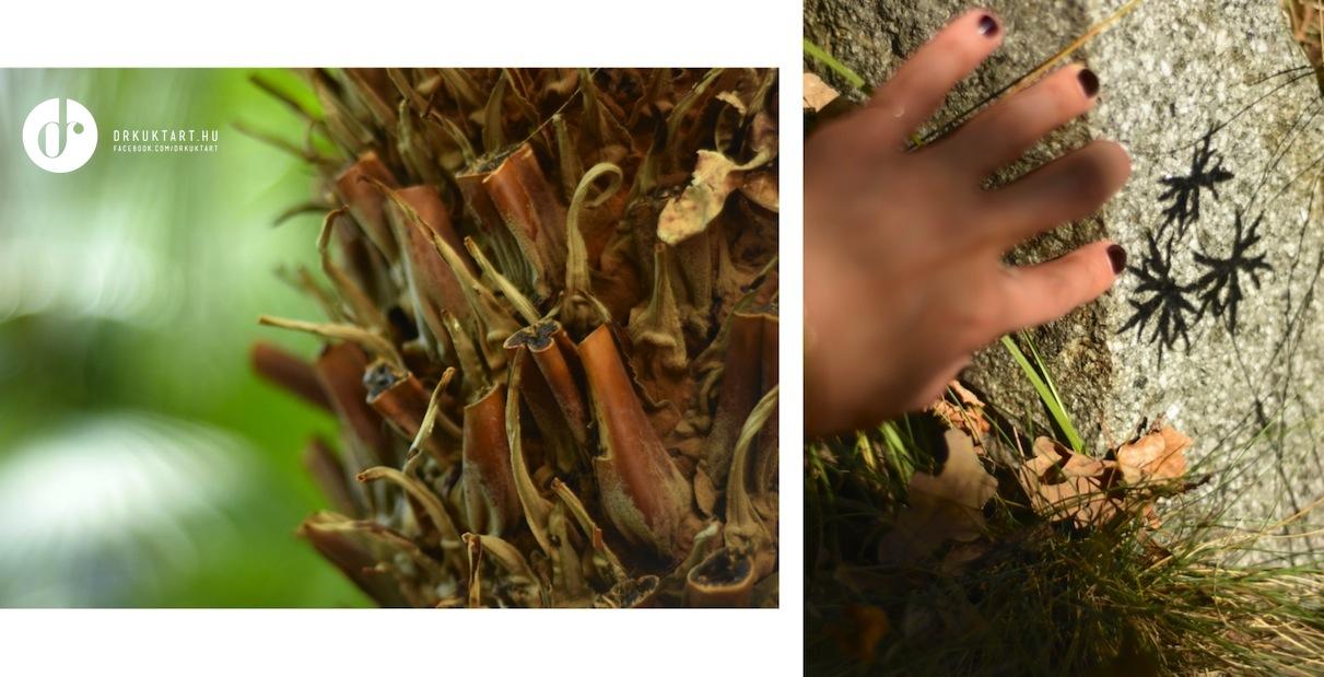 drkuktart_kolozsvarbotanikuskert_botanicalgardenclujnapoca18.jpg