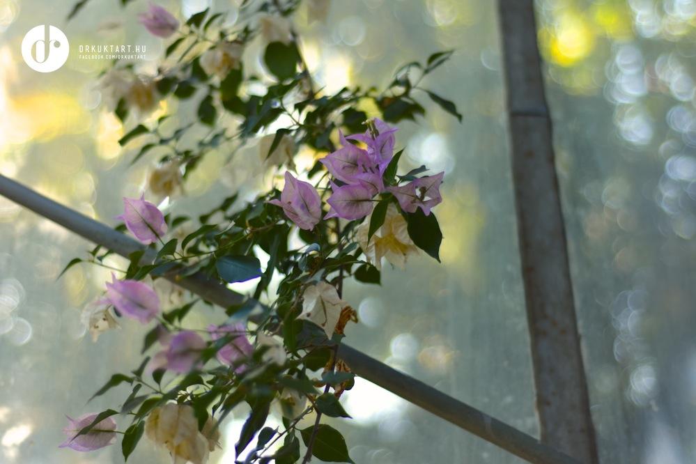 drkuktart_kolozsvarbotanikuskert_botanicalgardenclujnapoca19.jpg