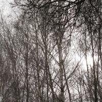 A fákról