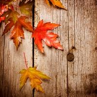 Az ősz színei mozaikokban elmesélve
