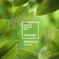 Lombzöld szín lett 2017 Pantone színe