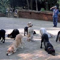Kutyanevelés - a kutyakiképzés
