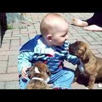 Kutyanevelés - baba és kutya