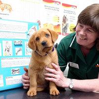 Kutyanevelés - egy kiskutya kötelességei