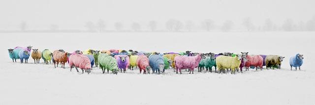 sheep-1476781_640.jpg