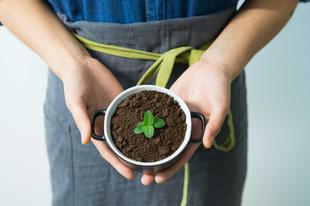 Fogadj örökbe egy növényt a jövő zöld városáért!