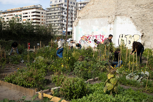 Közösségi kertészkedés a nagyvárosban