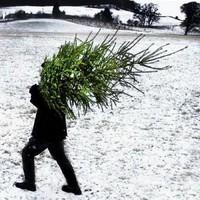 3 dolog, amivel a magyar állam idén ellopta a karácsonyt