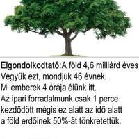 Így gyógyít az erdő