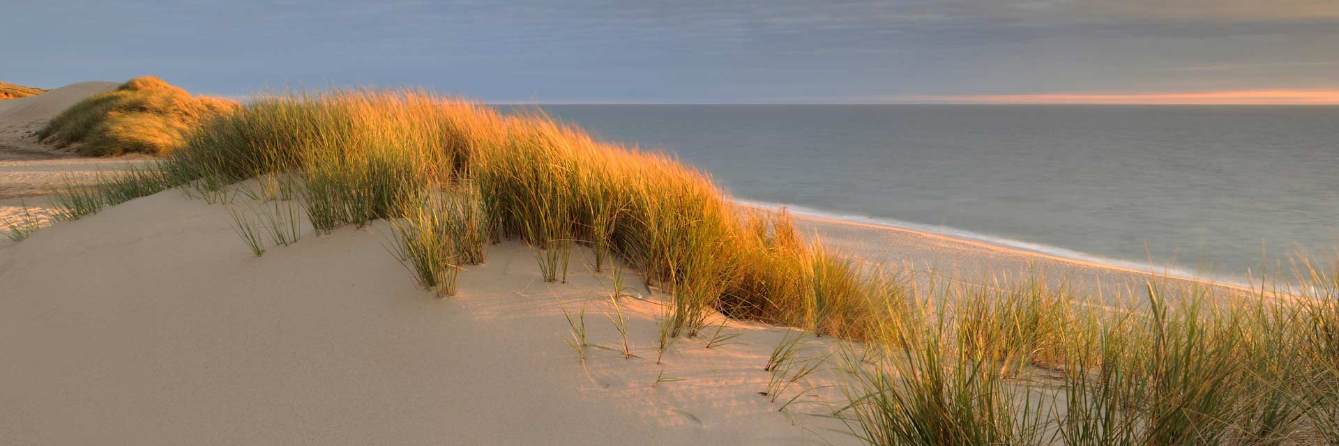 sylt-dune-nordsee-leinwandbild-arcy.jpg
