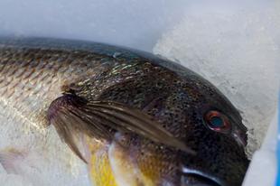 Főzzünk halat!