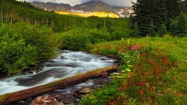 Virág, folyó